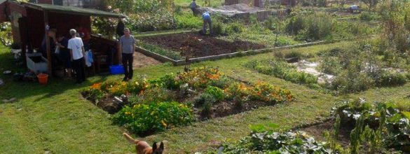 Please help our allotment project